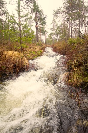 downstream: Viev from downstream of small river in  forest. Noise of stream Stock Photo