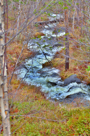 no rush: Viev from downstream of small river in  forest. Noise of stream Stock Photo