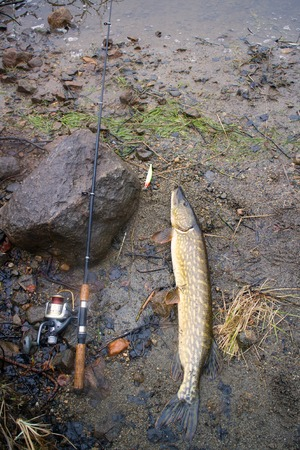 pike fast and progestin rivers fishing