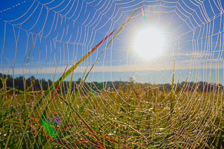 web in dew and among sunshine Stock Photo