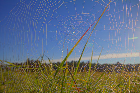 ploy: web in dew and among sunshine Stock Photo