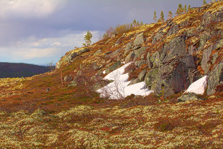 educacion ambiental: mountain tundra and forest at  bottom of  wonderful polar landscape