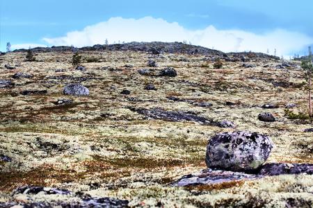 educacion ambiental: El sitio de rocas y plantas raras específicas. tundra de la montaña en Laponia