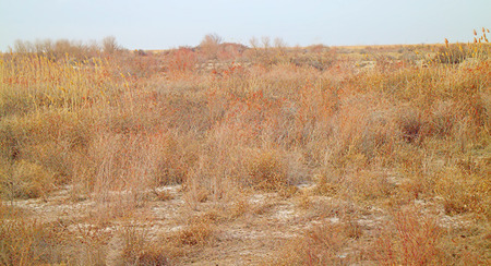 unorganized: Long agricultural fallow after the cessation of cultivation. Kazakhstan steppe