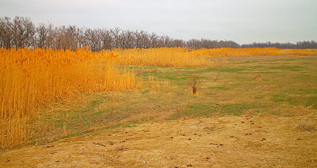 lenticular: Drought 1. Lake in steppe is completely dry, there is belt of reeds and forest. Yellow dry reeds and leafless trees, lake bottom is overgrown Stock Photo