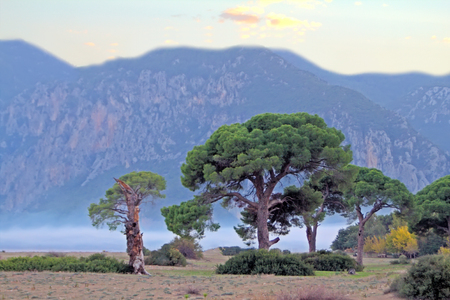 toning: Mediterranean. Romantic beach pirate treasure. Deserted beach and old umbrella pine (Pinus pinea), background of mountains, evening. Applied toning Stock Photo
