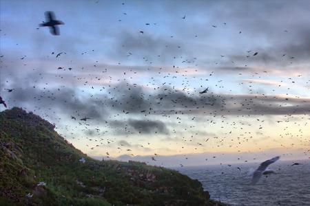 slew: Oodles. Sunset over ocean Islands. Aleuts-Commander island ridge. Pacific ocean. Over Islands fly lot of birds Stock Photo
