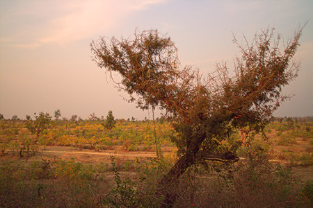 foothills: The area in district Nagpur, Maharashtra. India. Dry foothills with shrubs and peasant gardens. Stock Photo