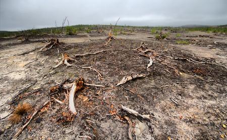 kwaśne deszcze: Zniszczony w wyniku działań Mende-Nikiel tundra hutniczy