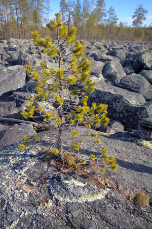 educacion ambiental: Piles of granite rocks in  taiga. Low camera position. Foto de archivo