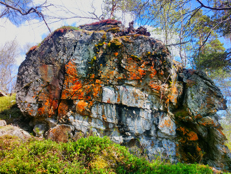Outlier. Huge stone in Northern woods where there are trees. Spring, colorful lichens, young leaves, blueberries, cranberries