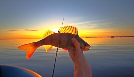 배와 막대가있는 선셋 강 농어 낚시 스톡 콘텐츠