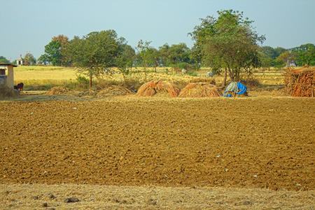 campesino: El �rea en el distrito de Nagpur, Maharashtra. India. estribaciones secas con arbustos y jardines campesinas.