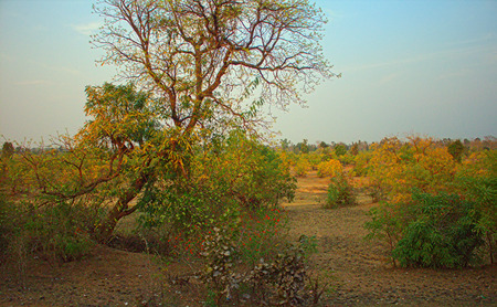 maharashtra: The area in district Nagpur, Maharashtra. India. Dry foothills with shrubs