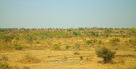 nagpur: The area in district Nagpur, Maharashtra. India. Dry foothills with shrubs