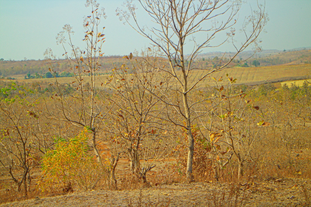 The area in district Nagpur, Maharashtra. India. Dry foothills with shrubs and peasant gardens. Stock Photo