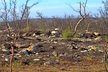 kwaśne deszcze: Destroyed as a result of activities Mende-Nickel smelter tundra Zdjęcie Seryjne