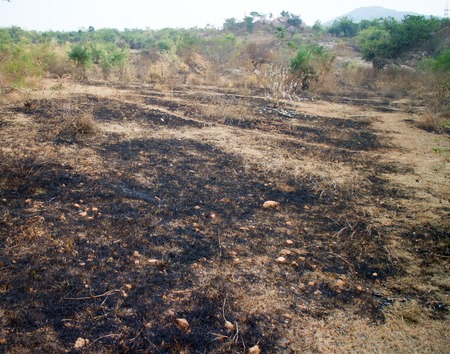 scorched: burn with fire ground in wild. scorched dry plains with bushes Stock Photo