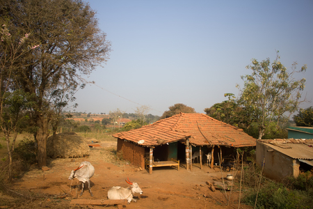 livestock sector: Poor Indian household (farm). House and cows in yard. Andhra Pradesh, Anantapur