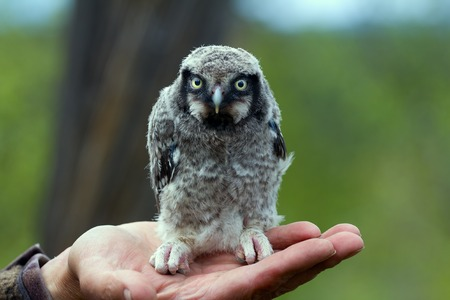 owl sits on palm in forest Stock Photo