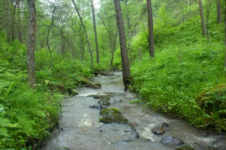 river flows in forest under a bias. water resources of Altai mountains Stock Photo