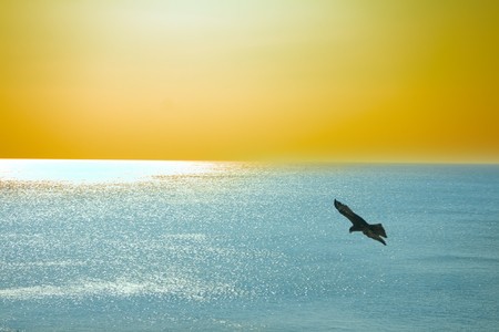 eagle falls: The sea eagles. Kites over Indian ocean. Tropical sunset and quiet surface of sea