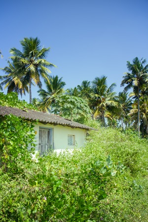tropical foliage lush with palm trees and a shack buried in wild plants. South of Indian subcontinent