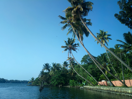 leaned: Classic tropics. High coconut palms picturesque leaned over river. Egrets and two strolling Indian