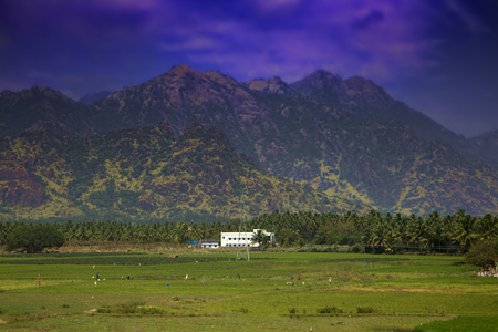 South India. Fields, groves of palm trees and a mansion in the foothills of the Cardamom mountains