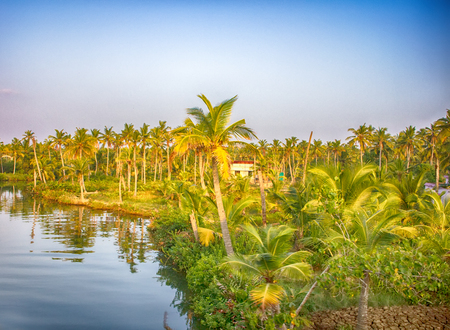 areca: Kerala backwaters, India. Tropical landscape. Channels and towns under palm trees