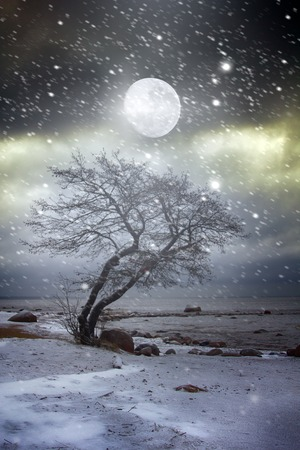 Fantasy on theme of winter. Solitary tree on the shore of frozen sea. Loneliness and restlessness in moonlight