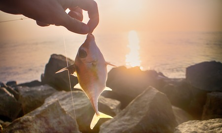 triggerfish: Fishing in India. This triggerfish caught on clam meat, picked up on beach. Kerala and Goa
