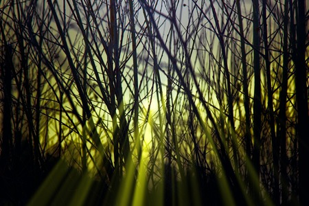 Mysterious light. Fabulous rays penetrate through branch of trees at sunset