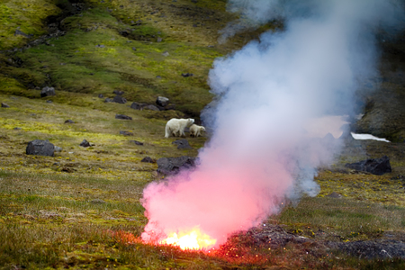 Polar bear (ice bear, Ursus maritimus) attacked photographer. Female never seen people and protects cub. Rocket fired into ground between predator and man to ward off animals