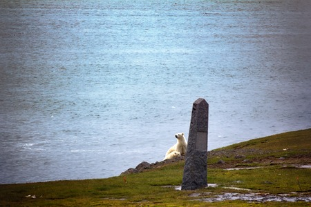 josef: Polar bears on Franz Josef Land. Female with cub watching photographer from behind monument to expedition of duca degli Abruzzi to North pole (1900). Conquest of North pole Stock Photo
