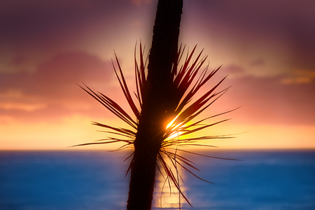 Idyllic beach holidays in hot countries. Warm sea, tropical sunset and carved palm leaves. It makes our stay pleasant one