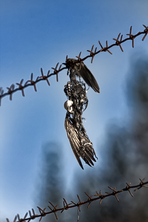 Human as cause of animal death, ridiculous death. Mavis caught with wing over barbed wire and ended in skeleton with feathers.