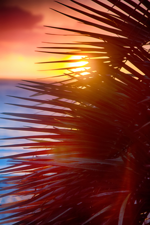 What makes our holidays happy? Idyllic beach holidays in hot countries. Warm sea, tropical sunset and carved palm leaves.