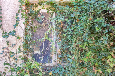 nature has returned to space. window is fully hidden behind vines in a green world
