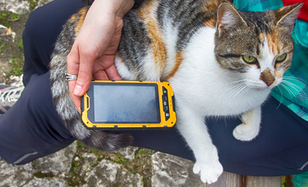 Das Mädchen, das auf Smartphonelied für seine geliebte Katze spielt - Katze schnurrt als Antwort Standard-Bild - 84929968