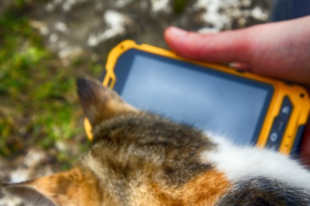 Blurred background. Girl playing on smartphone song for his beloved cat - cat purrs in response Stock Photo