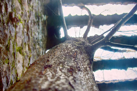 unusual phenomenon. Long live freedom - tree growing through massive concrete grid. concept of freedom and aspirations in life. vital force, energy, vital power, living force, strain after light