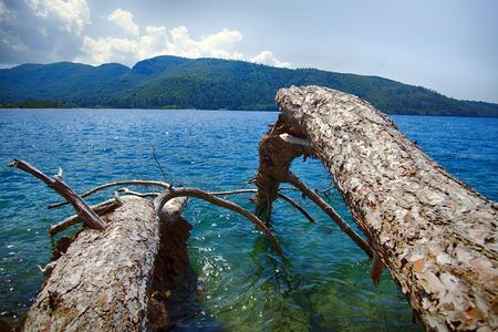 landscape: Sea grind trunk of fallen in water tree. shooting in contour