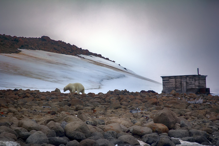 Polar bear often comes to home weather stations, hunting cabin on islands in Arctic ocean. Stock Photo