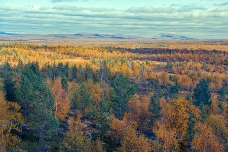 Mellow autumn. Midst of autumn in Boreal coniferous forests (taiga) with admixture of birch and aspen. Scandinavia, Lapland