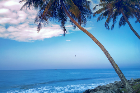 tropical beach with coconut palm at sunset a warm day