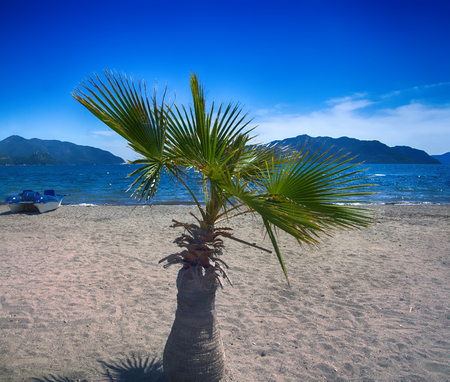 Mediterranean beaches are waiting for tourists, seaside resort, climatic health resorts. Sun loungers, deckchairs, umbrellas, dining tables and palm trees on beach