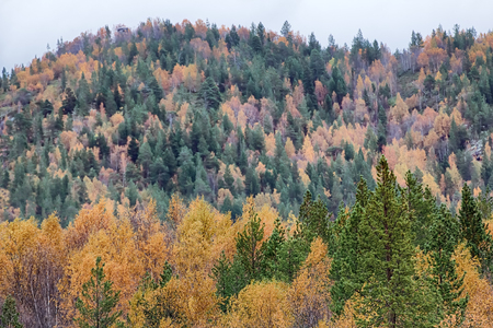Mellow autumn. Midst of autumn in Boreal coniferous forests with admixture of birch and aspen. Scandinavia, Lapland Stock Photo
