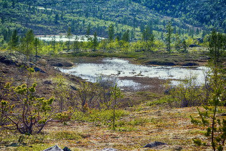 northern polar mountain tundra landscape with marshland in summer