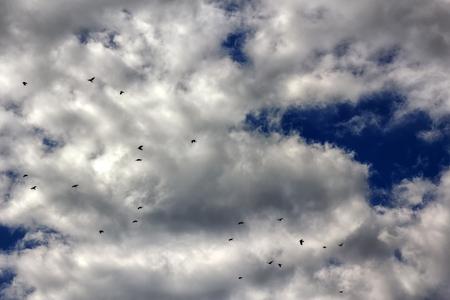 ravens in sky autumn grey gloomy mood. black birds in dark clouds Stock Photo